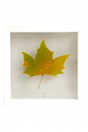 Save the Flowers - Plane Tree Leaf Tablo