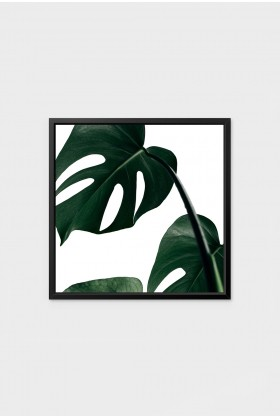 Action Zebra - Monstera 2 21x30 cm Poster